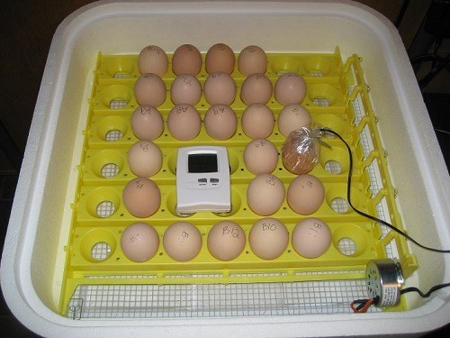 Measuring Internal Egg Temp