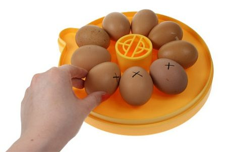 Turning your eggs in an incubator.