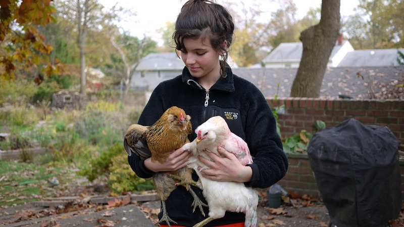 The Various Benefits Of Homegrown Chicken