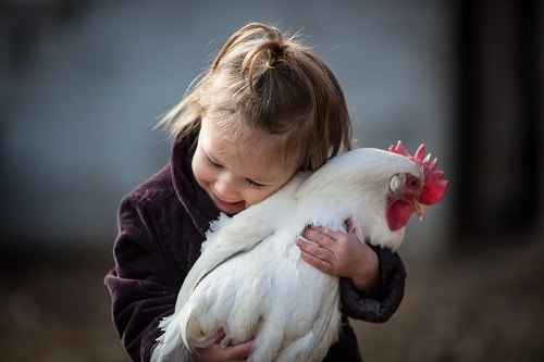 Girl with a pet chicken.