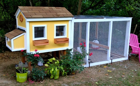 Best Chicken Coop For Your Backyard
