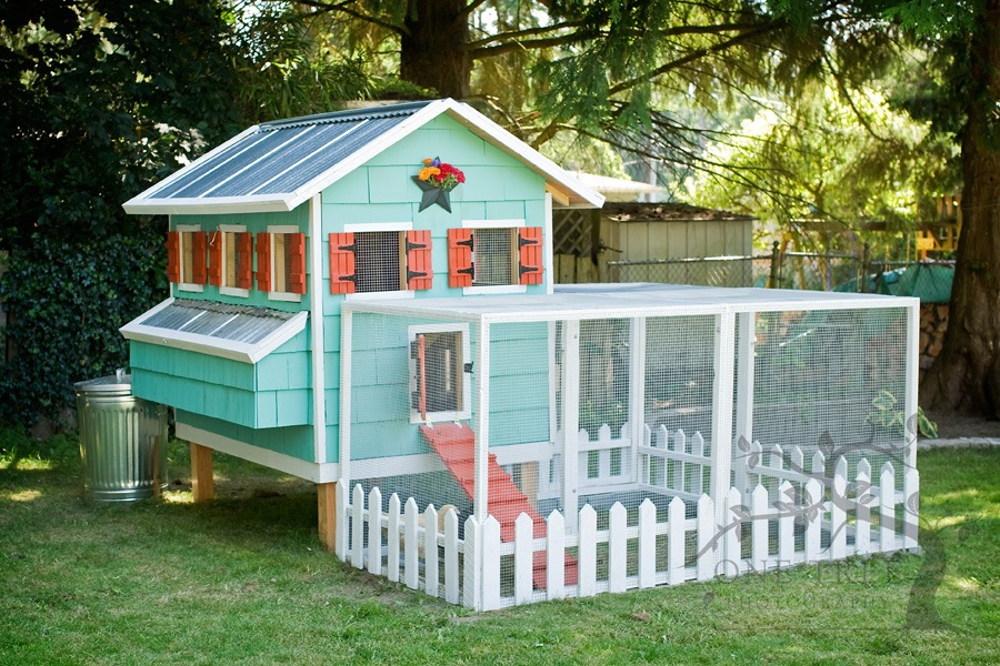 The Best Chicken Coop For Your Backyard
