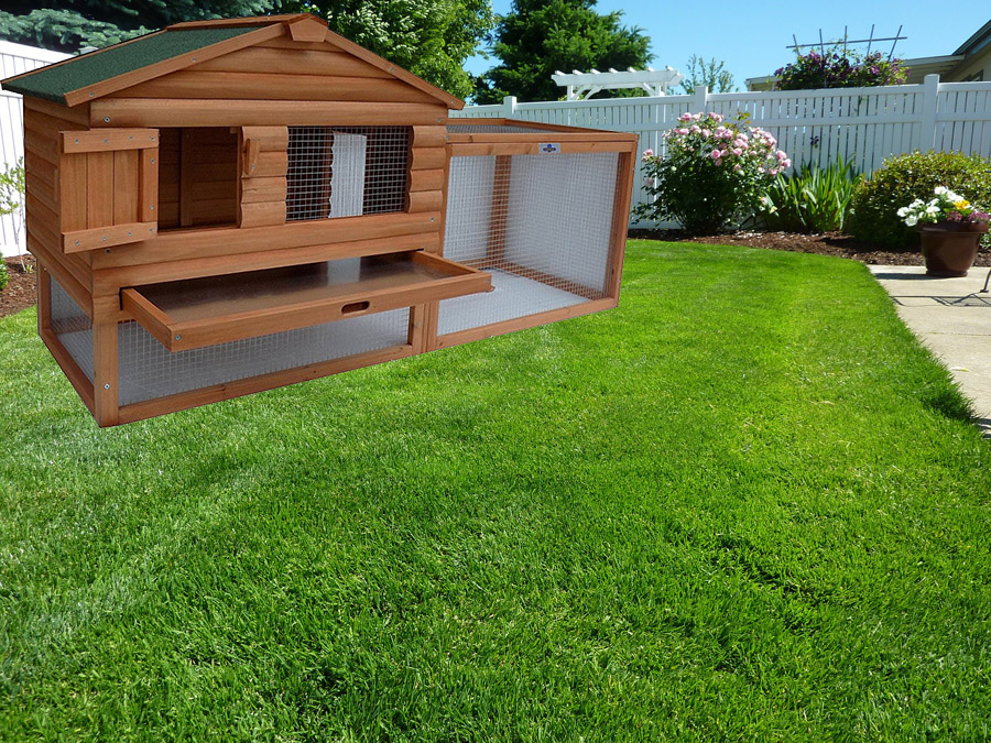 Confidence Pet Chicken Coop Review